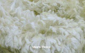 Fleece pic