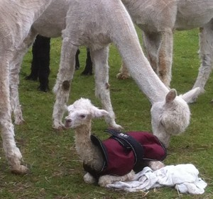 Nigella, being the attentive mother, as usual!